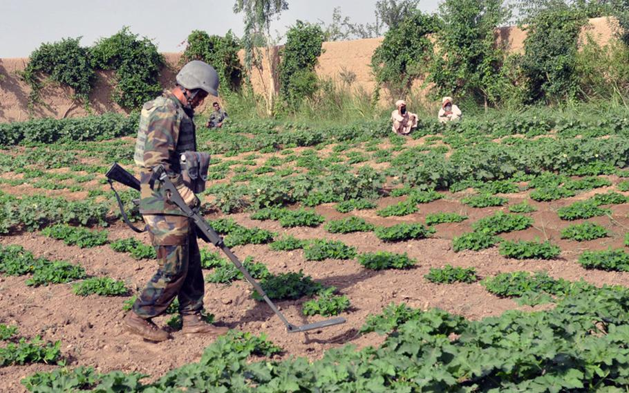 An Afghan National Army soldier sweeps for hidden bombs in a farming field inside a compound in Marjah on June 25. The joint operation was in search of bomb-making materials following a tip from a civilian.