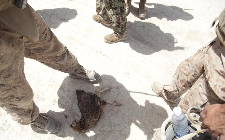 Marines stand over a dead chicken, supposedly killed by their bomb-sniffing dog, Shaggy.