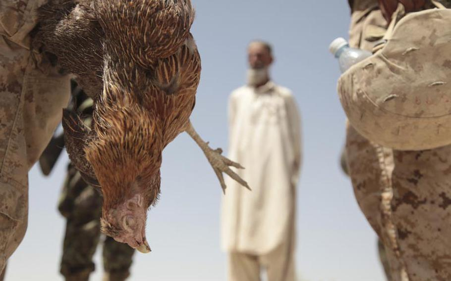 1st Lt. Nathan Fukuwa, the 25-year-old commander of 1st Platoon, holds a chicken supposedly killed by a Marine bomb-sniffing dog as the Marines searched for homemade explosives in the small village of Tor Jan in southern Garmsir district, Helmand province.