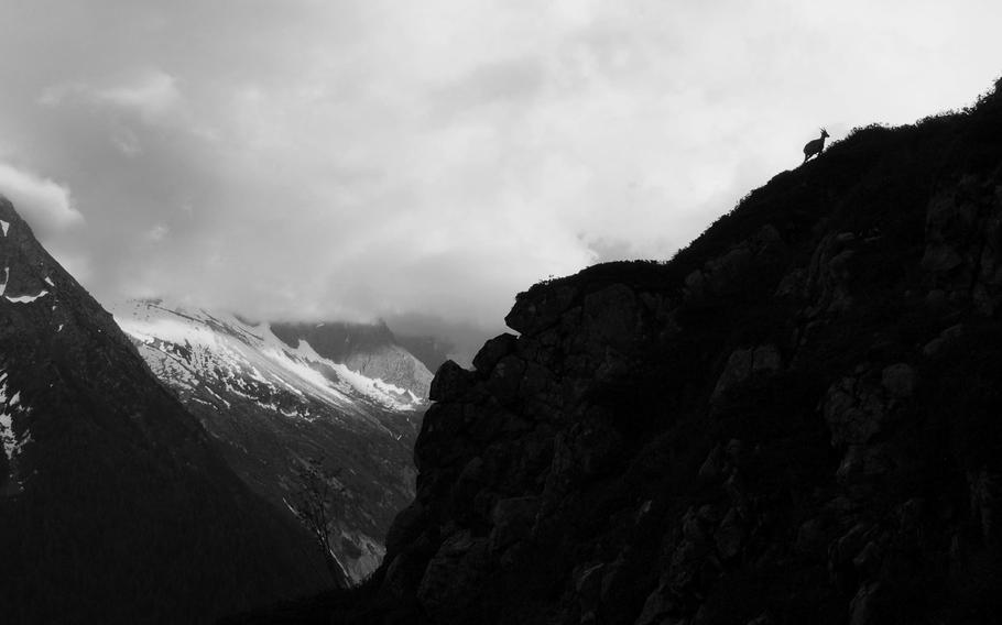 An Alpine Ibex is silhouetted in the mountains above the Chamonix Valley, France.