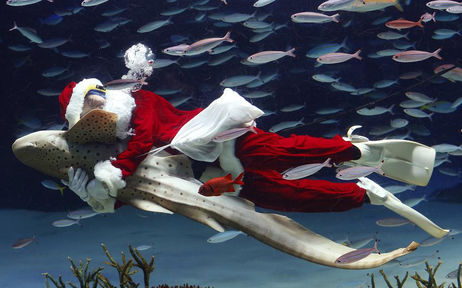 SHARK EMBRACE | Not to be outdone by scuba-diving Santas other regions, this Santa (or aquarium staff member) embraces a Zebra shark as he swims inside the Sunshine International Aquarium in Tokyo on Dec. 11, 2013.