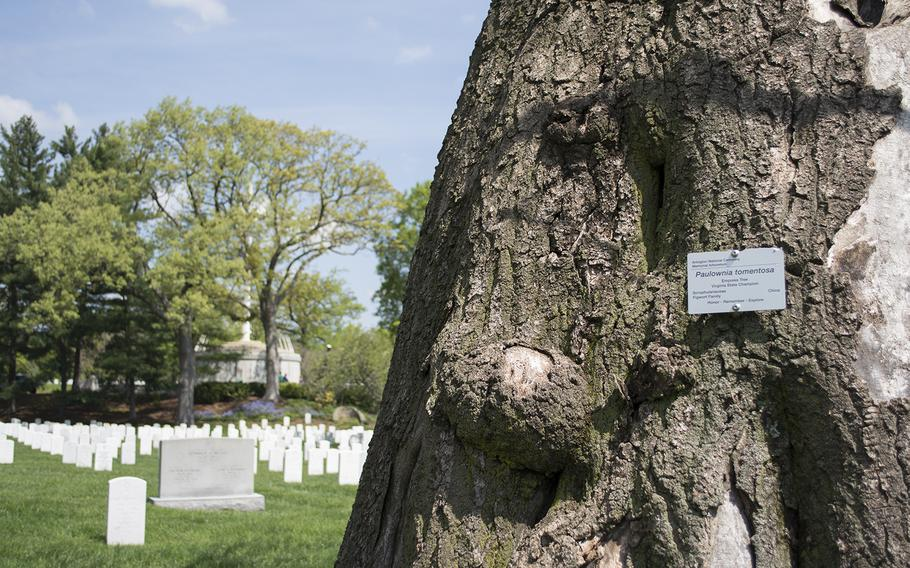 One of the state champion trees at Arlington National Cemetery in May 2014. The name tag is part of a larger project at Arlington to highlight noteworthy trees.