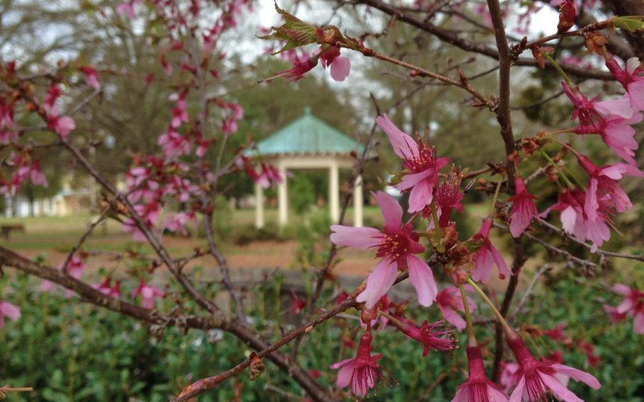 """The """"old well"""" on the grounds of the Wake Forest College birthplace in Wake Forest, N.C., is framed by erupting cherry blossoms on March 21, 2015."""