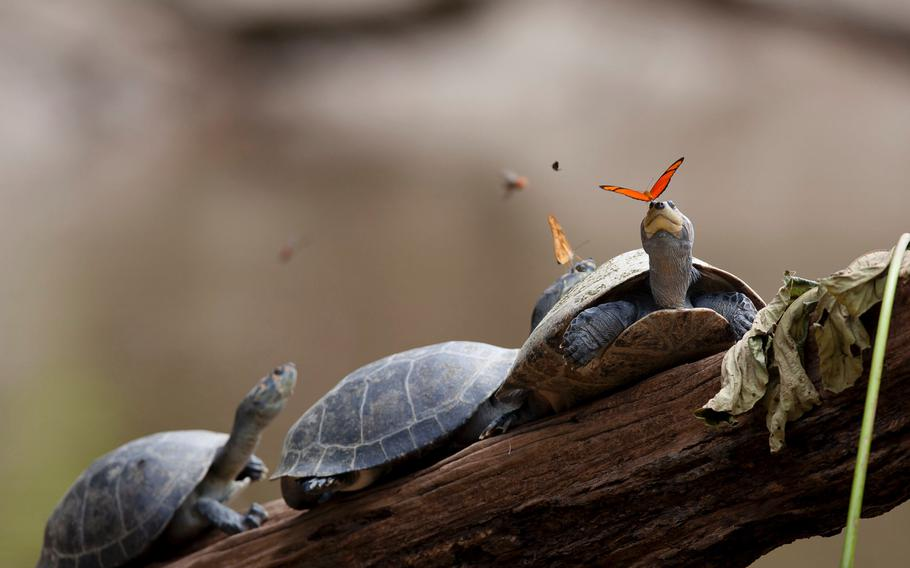 """1ST PLACE 