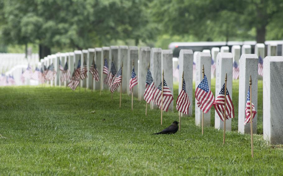 A bird checks out the American flag placed at a headstone at Arlington National Cemetery on Thursday, May 21, 2015, as part of the Flags-In. Every headstone in the cemetery had a flag placed at it by the Old Guard.