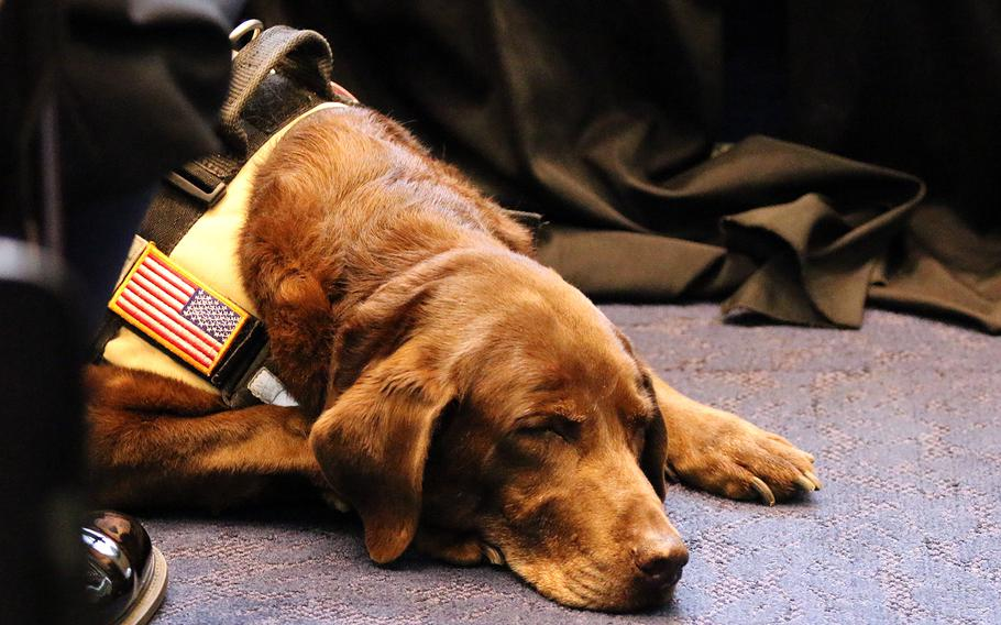 Military working dog Coffee takes a nap at the American Humane's K-9 Medal of Courage Awards on Capitol Hill on Oct. 11, 2017.