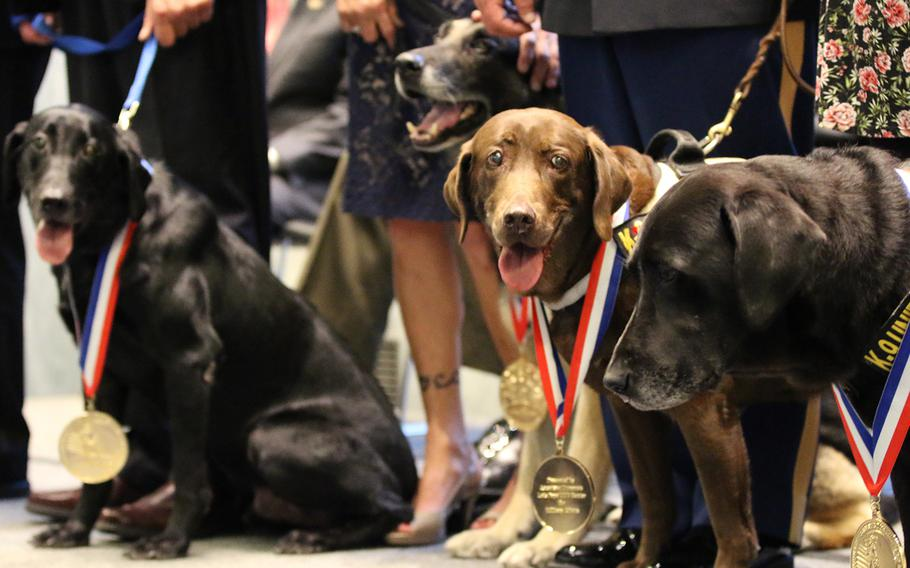 Four of the five dogs being honored at the American Humane's K-9 Medal of Courage Awards on Capitol Hill on Oct. 11, 2017 line up on the stage after receiving their medals. The fifth dog was being honored in memoriam. From left to right the dogs are Ranger, Capa, Coffee and Alphie.