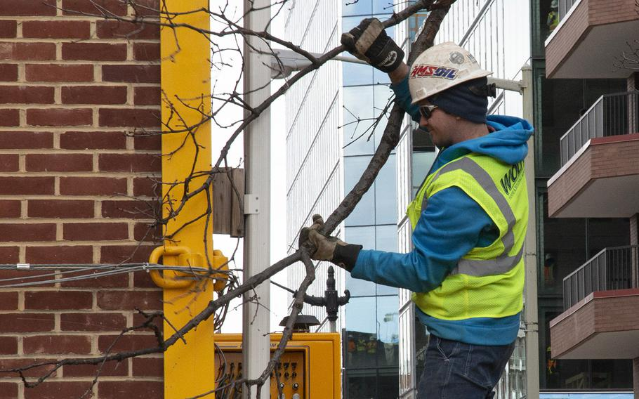 A worker frees a tree branch as Washington's oldest synagogue building is moved down 3rd St. Northwest to its permanent location at the Lillian and Albert Small Jewish Museum site on January 9, 2019.