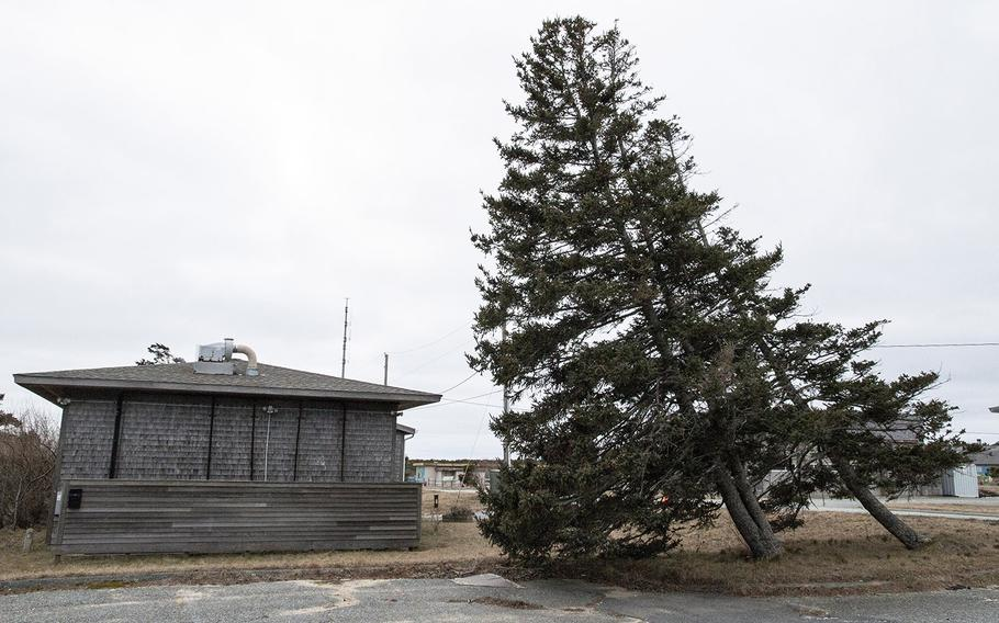 Tilted trees at the former North Truro Air Force Station on Cape Cod, in January, 2019 show the effects of wind on the location high above the Atlantic Ocean.