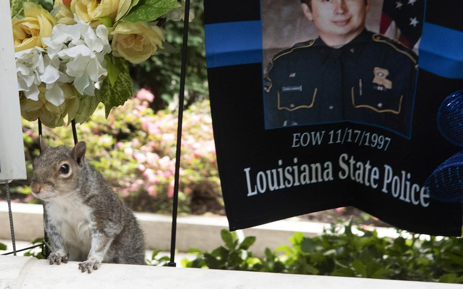 A squirrel intrudes on the memorials during National Police Week at the National Law Enforcement Officers Memorial in Washington, D.C., May 14, 2019.