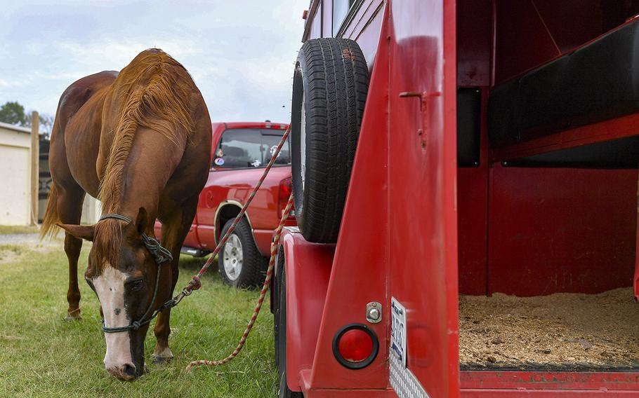 Dollar, a horse kept at the Langley Air Force Base stables, waits to be loaded onto a trailer September 5, 2019 at Joint Base Langley-Eustis, Va. Dollar and the other horses were evacuated in preparation for Hurricane Dorian, along with supplies such as feed, water buckets and medical supplies.