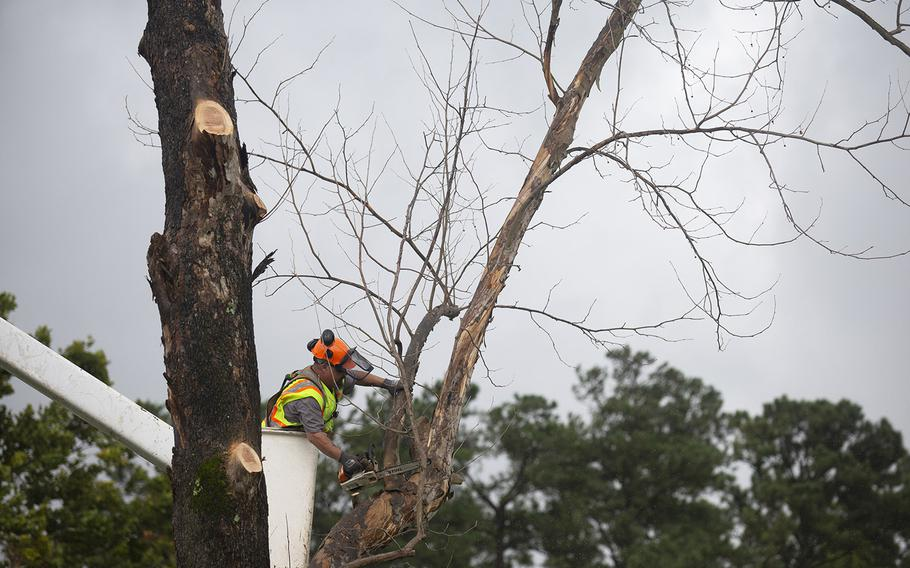 A crew member with State Tree Services from Sumter, South Carolina, removes an unstable tree near base housing ahead of Hurricane Dorian's arrival at Marine Corps Base Camp Lejeune, N.C., Sept. 5, 2019.