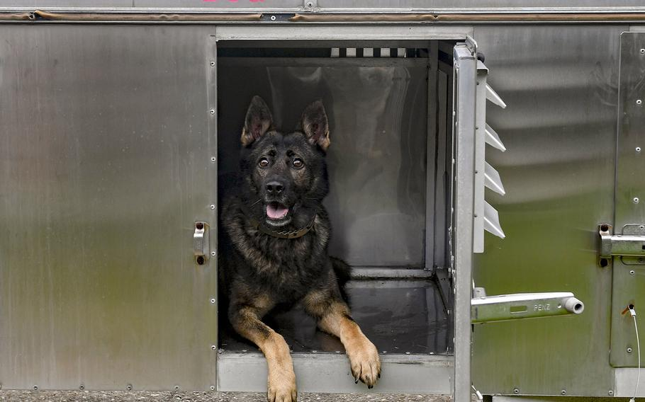 Rony, a 633rd Security Forces Squadron military working dog, waits for evacuation September 5, 2019 at Joint Base Langley-Eustis, Via. The military working dogs were evacuated to Joint Base Andrews, Md.,in preparation for Hurricane Dorian.