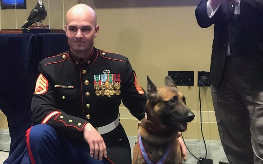 Staff Sgt. Alex Schnell kneels next to Bass, after the dog was awarded the Medal of Bravery for valor in combat.