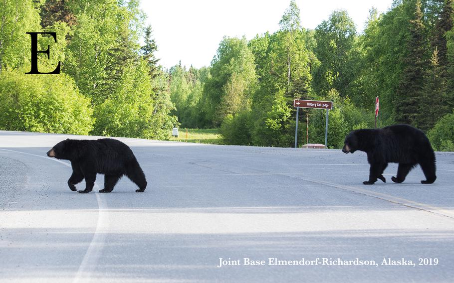 Two black bears roam around Joint Base Elmendorf-Richardson, Alaska, May 30, 2019. During the summer, bears are considerably more active, which can increase the risk of bear-related incidents. By practicing proper bear safety, Alaska residents can reduce the risk of unwanted bear encounters.