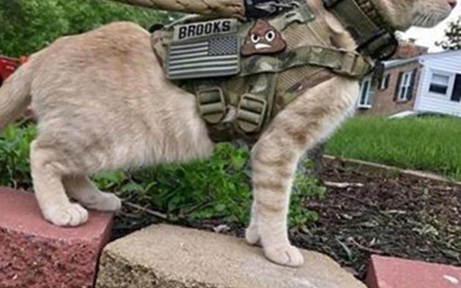 U.S. Forces Japan celebrated April Fools' Day by tweeting a photo of a cat named Muffins tactical patches and the sort of camouflage harness you might expect to see on a military working dog.