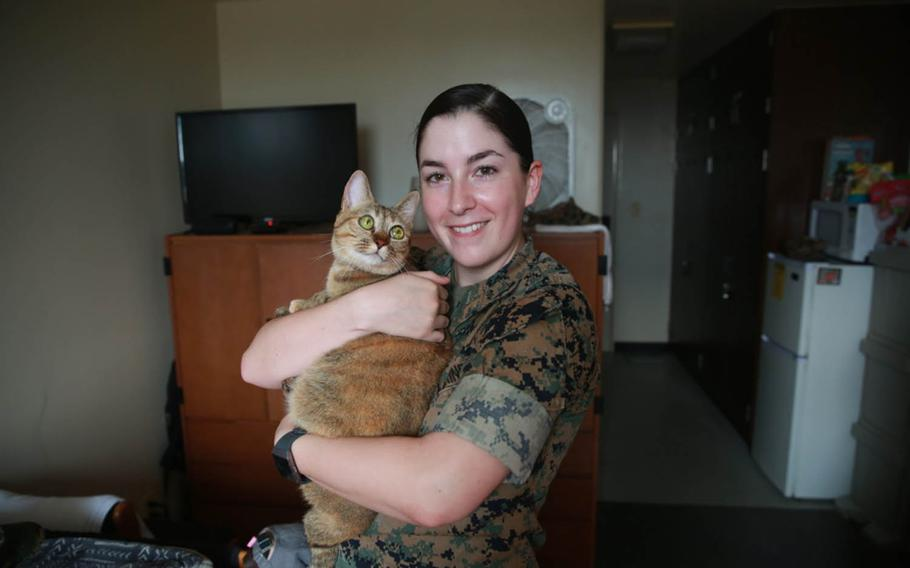 An April Fools' Day prank by the III Marine Expeditionary Force announced that Marines living in the barracks will be allowed to keep one pet if they submit a package to their chain of command and complete a class, Pet Care and Training 100.1.