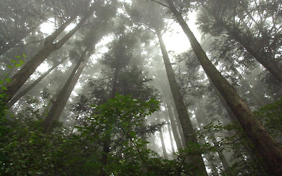 From the hiking trails on Mount Mitake you are dwarfed by the towering and wonderous canopy of cyprus and cedar trees.