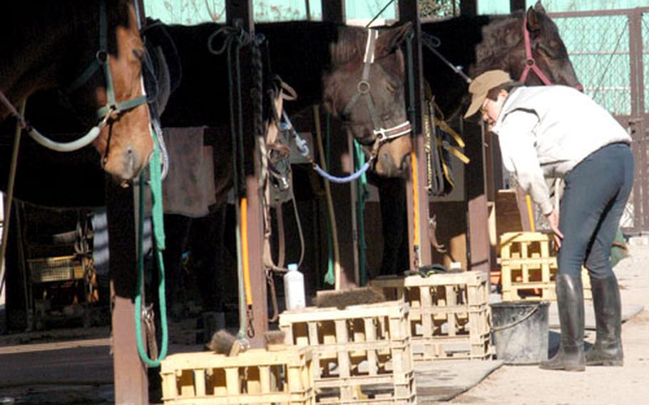 Caretaker Kenichi Isoda inspects some of the horses available for rides or lessons at the recreation area.