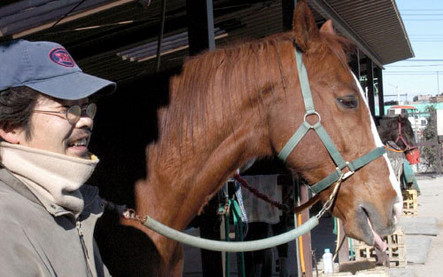 Riding instructor Akihisa Nakai, watches the horses at the Tama Hills Recreation Area.