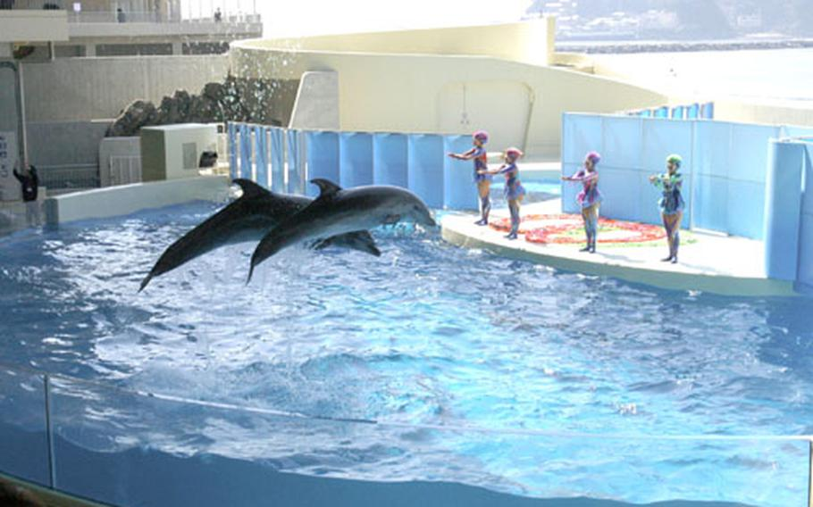 The new Enoshima Aquarium was opened on April 16 near the old aquarium. The new aquarium is a lot larger with a huge water tank of 1,000 tons and more fish and sea animals.
