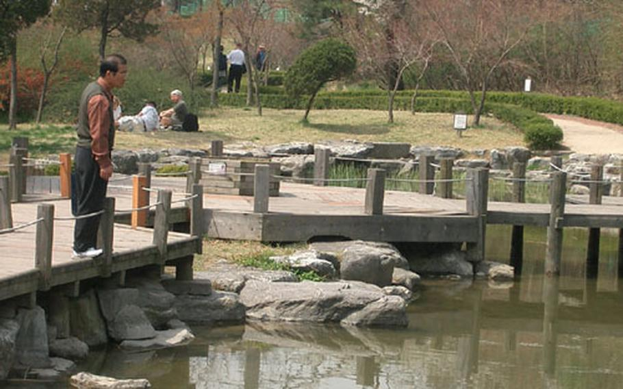 A man stares at the carp pond in Namsan Park. Winding paths in the lower part of the park have a variety of flora and fauna.