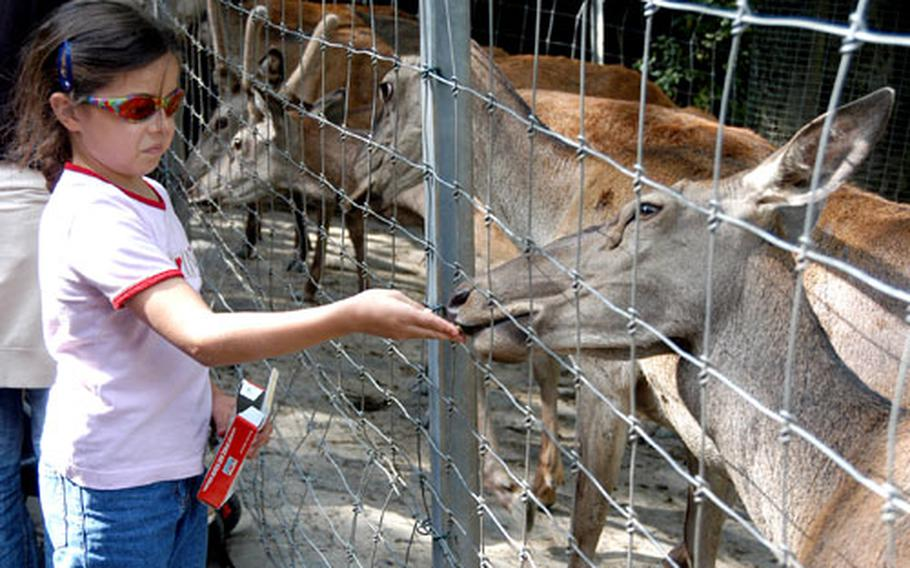 A young visitor to the Opel Zoo feeds a deer with food that can be bought at the zoo. The Kronberg, Germany, zoo features more than 1,000 animals of 200 different species.
