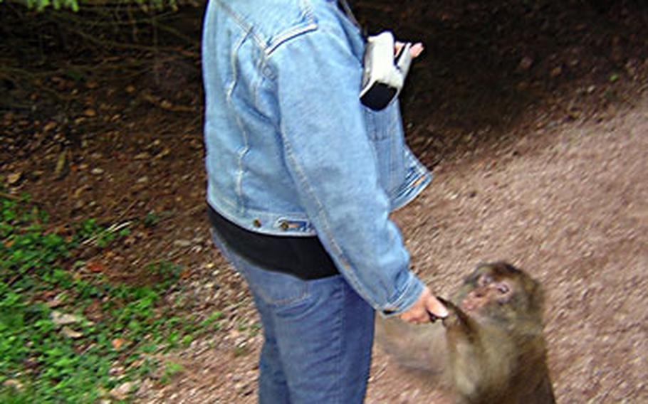 This monkey, shown stopping a visitor for a handout, was shortly chased off the path and into the woods by one of the keepers. The staff keeps an eye on both the monkeys and visitors to make sure all behave.