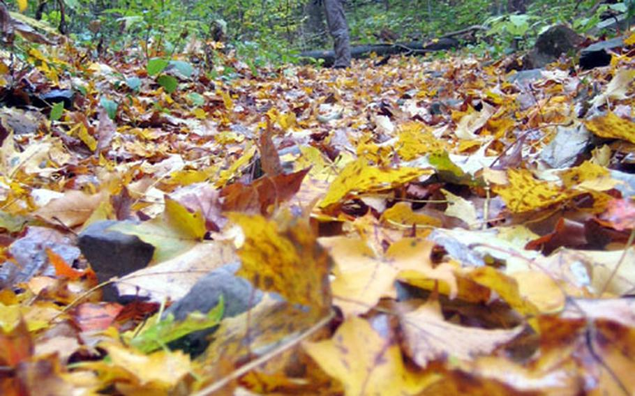 The writer, Heather Benit, makes her way along a horse trail at Catoctin Mountain Park in Maryland, with a carpet of leaves at her feet.