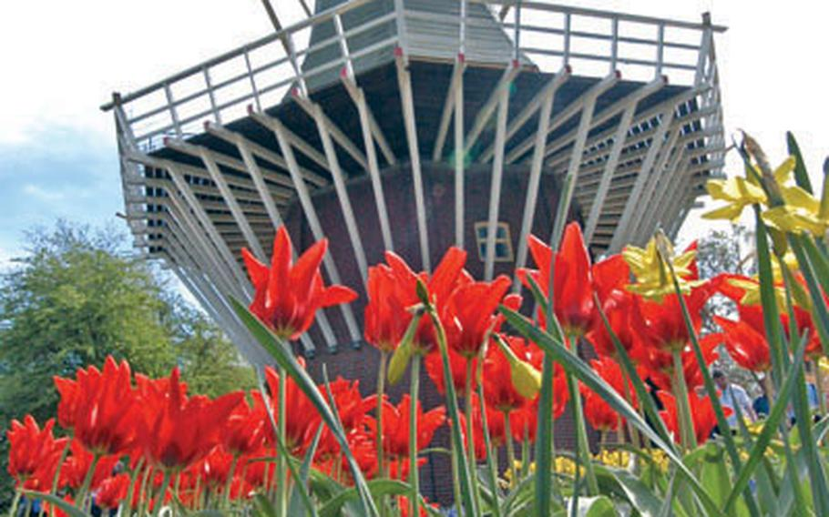 Flowers bloom in front of the windmill at Keukenhof, the famous Dutch flower garden on the outskirts of Lisse, Netherlands.