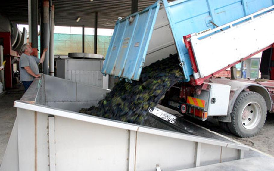 A truck unloads recently harvested grapes that will be processed to produce Solopaca Agliancio, a red wine.