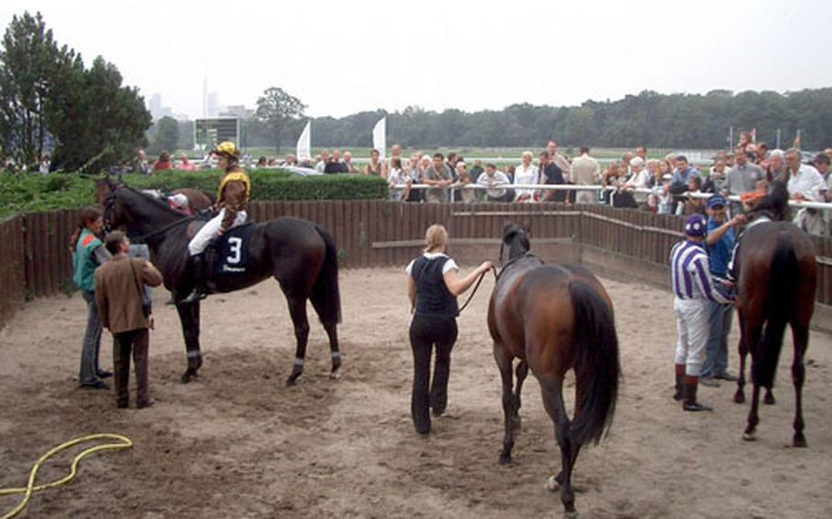 The race horses — winners and losers alike — are hosed down and groomed after a race.