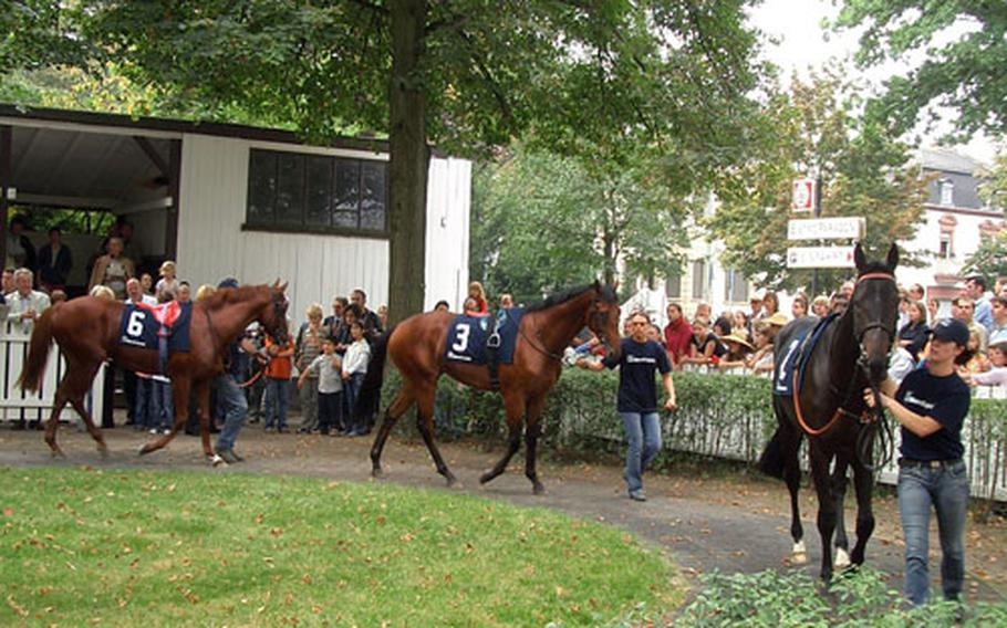 Racing fans and horse lovers watch as the horses loosen up in the paddock area before the next race at Galopprennbahn Frankfurt.