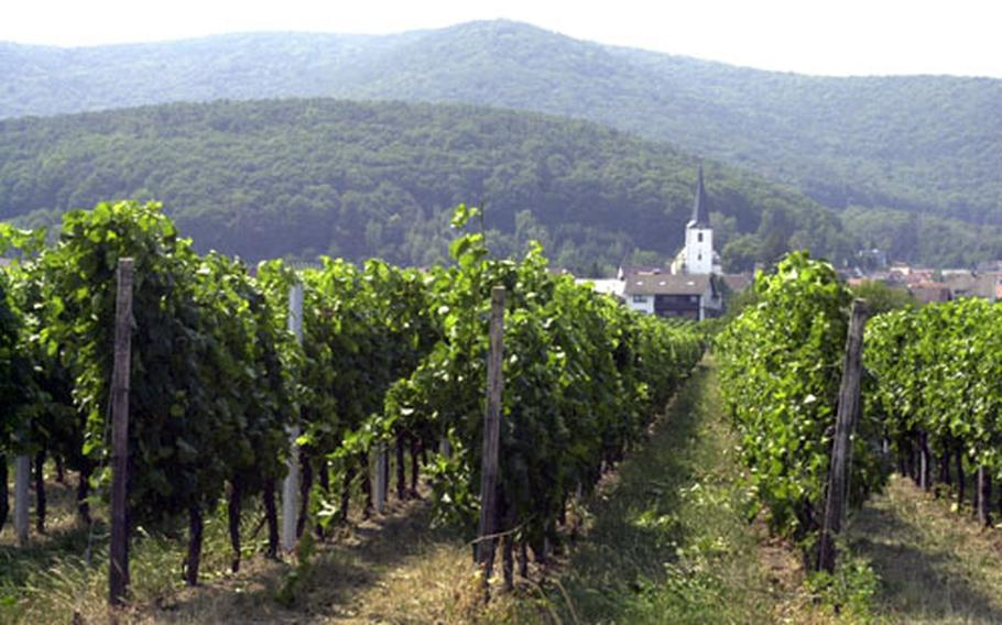 A vineyard just outside the town of Neustadt an der Weinstrasse produces one of the things for which the town is famous.