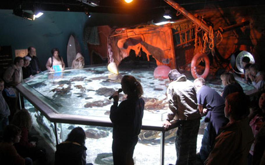 A Sea Life guide talks about the various crustaceans, rays and other fish living in one of the Speyer, Germany, aquarium's main attractions. The aquarium showcases animal life in Germany's waters.