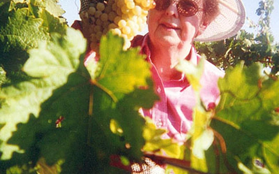 Donna Domingo, an active member of the American military community -- including secretary of the the secretary of the Retired American Military Iberian Council -- cuts a cluster of Palomino whites at the wineyard operated by Henry Marquez. She is the only American who helps him with the harvest.