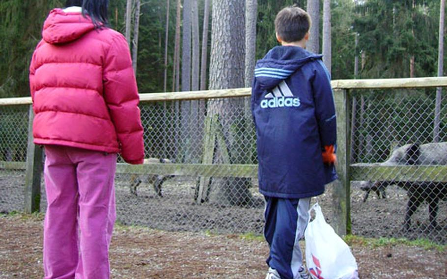 Visitors from Grafenwöhr feed wild boar at a fenced-in area of Veldensteiner Forest.