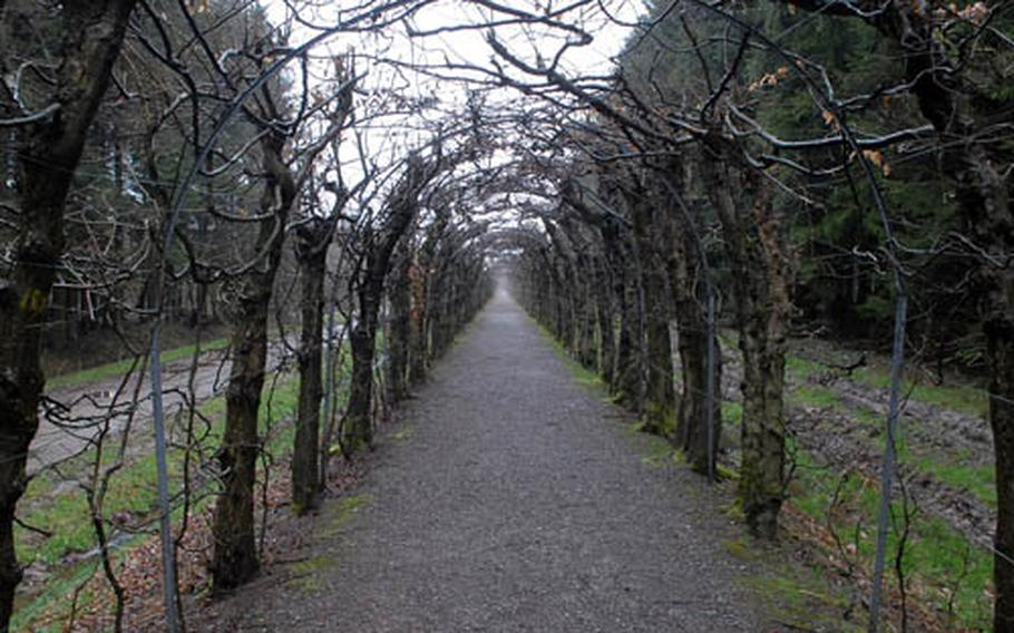 The Charmille, a covered walk of hornbeams, near Desnié, Belgium. Made from about 4,500 pruned hornbeams, a type of birch tree, it is the longest hornbeam bower in Europe.