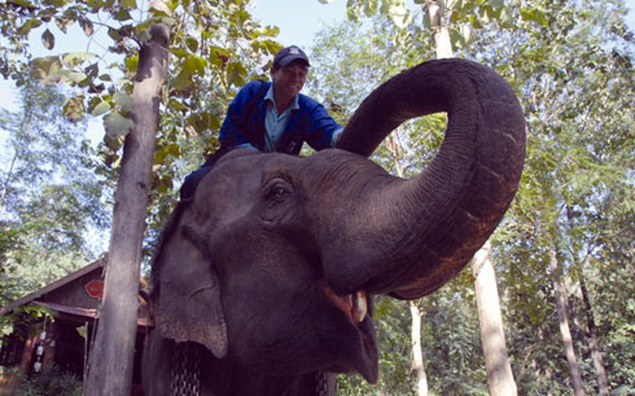 Elephant Dor Satit and his mahout, Sak, after a training session with tourists at the National Elephant Institute.