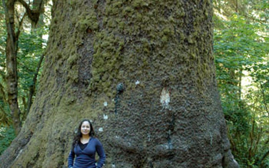 Carol Dubee poses next to a several hundred-year-old Sitka spruce tree in Olympic National Park's Hoh Rain Forest.