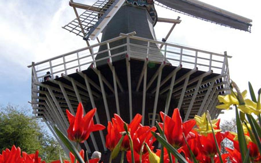 Tulips and crocuses bloom in front of Keukenhof's old windmill.
