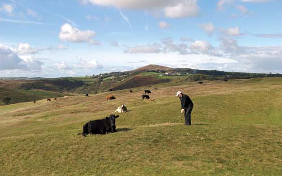 Writer Bruce Selcraig with some of the cows that are permitted to graze at Pennard Golf Club in Wales.