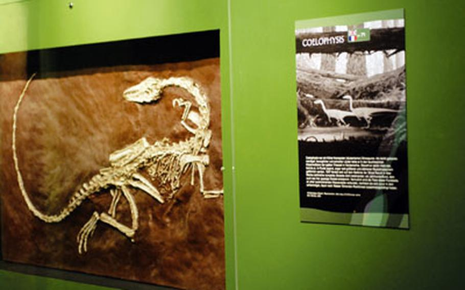 Fossils and information panels hang on the walls.