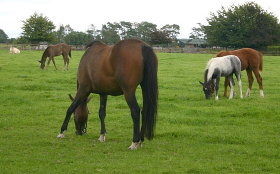 Horses graze at the Irish National Stud farm, which is open to tourists. Stud fees for the top stallions can run up to 50,000 euros.