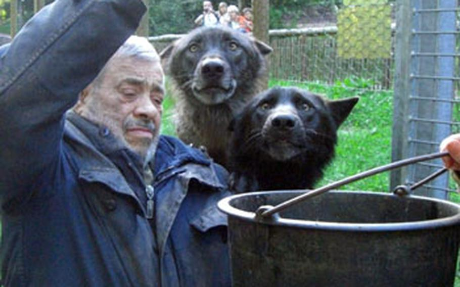 The wolves surrounding Freund can hardly hold themselves back as he tosses them fresh, raw chickens.