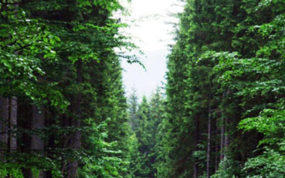 Cyclists follow a path bordered by towering, majestic trees in the Bavarian Forest National Park, 94 square miles of wilderness.