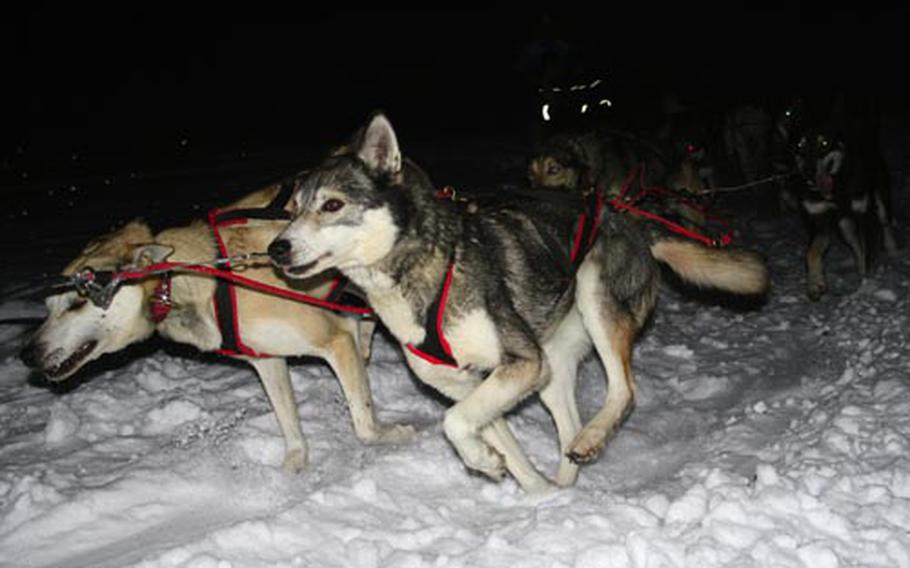 Regardless of the time of day, a ride through a field of snow with a team of huskies is a popular activity around the restort town of Levi, Finland.