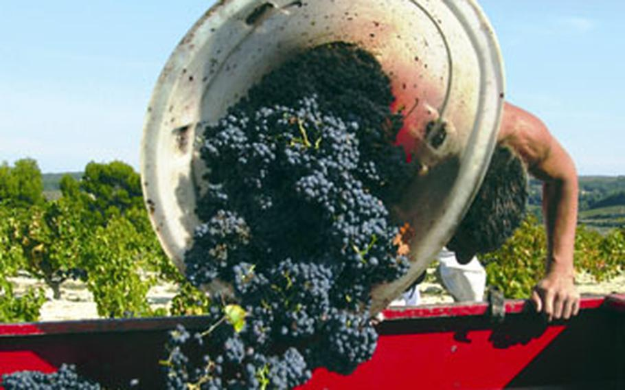 A worker unloads recently harvested Côtes du Rhône grapes. The region is the second-largest wine area in France with 190,000 acres of vineyards.