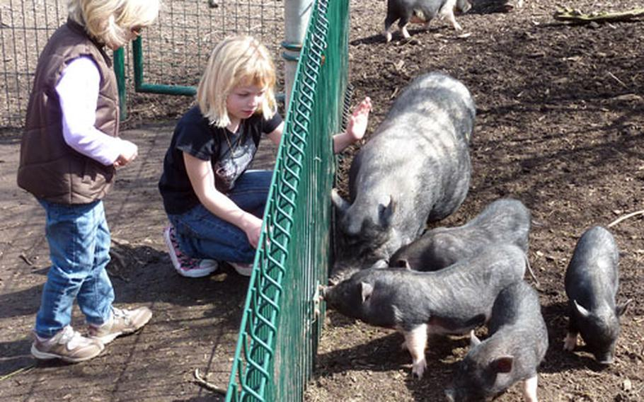 Two girls at the Neunkirchen zoo try to coax the pigs to the fence to pet them.
