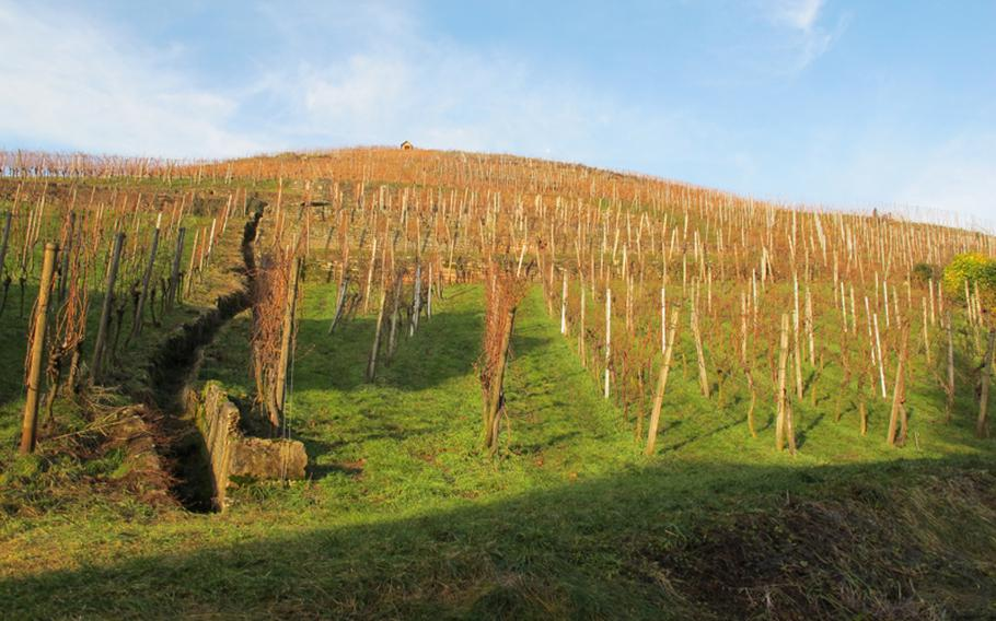 Besens are often situated right among the vineyards from where the grapes originate.  In the winter, after the grapes are harvested and the leaves are gone, the vineyards provide the appropriate backdrop for tasting wine.